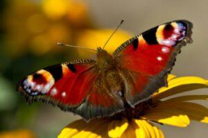 Wie der Schmetterling auf dem Bild in den Tag starten. Frisch, beschwingt und mit innerer Achtsamkeit.