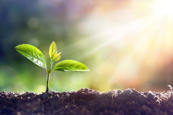 Eine kleine Pflanze wächst im Sonnenschein. Irgendwann wird die kleine Pflanze ein kräftiger starker Baum. So ist auch auch wie mit Focusing lernen. Klein fängt man an und dadurch wird man stark.