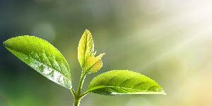 Ein zartes Pflänzchen möchte aus dem Boden in die Sonne. Ein Bild für den ersten Schritt zum Einführungskurs Focusing.